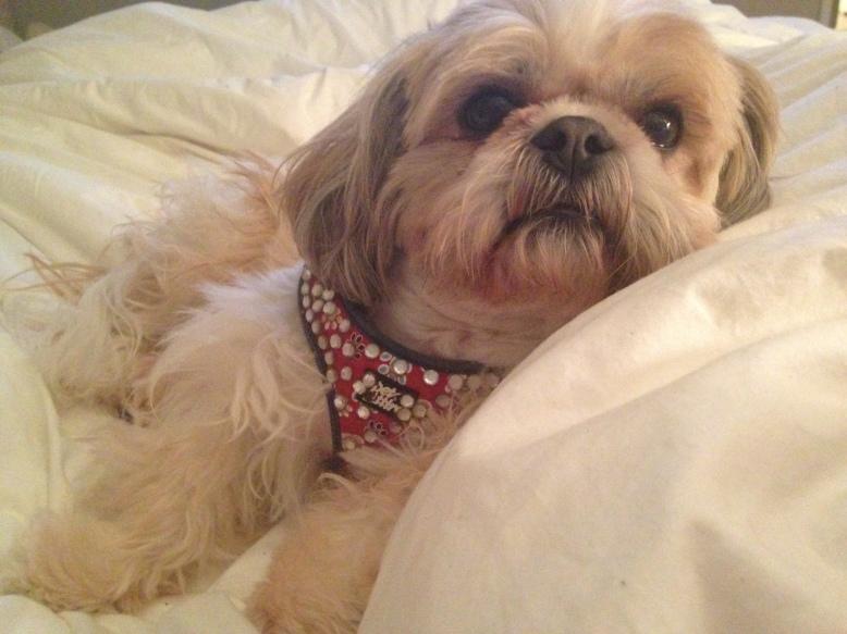"""""""muffin"""" named news face of  Bark Avenue Bling"""