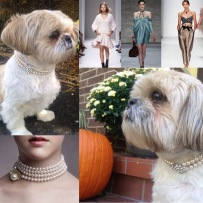Fall Trend; Choker Necklaces